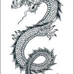 Modèle de tatouage de dragon