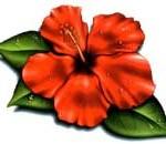 Modèle tatouage Gwada fleur d'hibiscus
