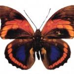 Modèle de tatouage de papillon et symbolique