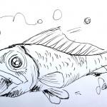 dessin poisson by san coloured skin bruxelles