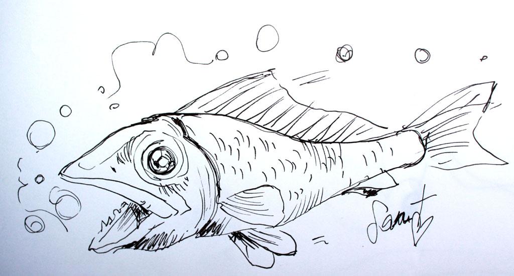 poisson tatouage dessin   kolorisse developpement